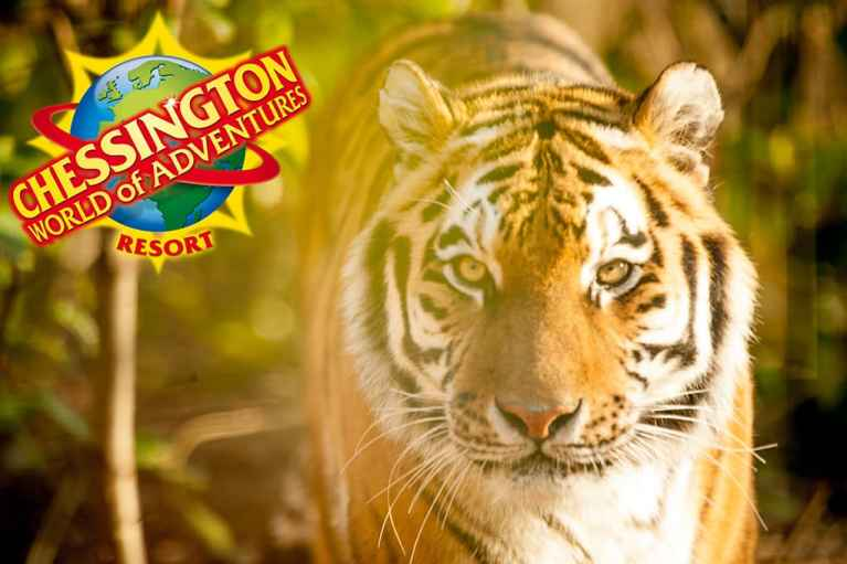 Chessington Image of Tiger